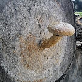 NATURE FUN by Giovanna Pagliai - Nature Up Close Mushrooms & Fungi ( different, amazing, fungi, nature, funny, rain )