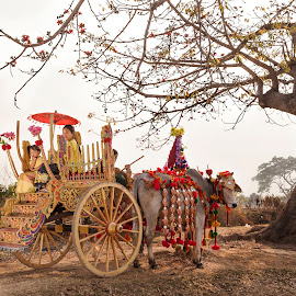 Myanmar traditional  by Koko NaingLin - People Family