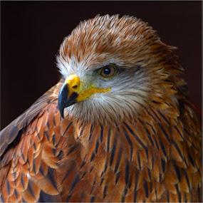 by Stephen Hooton - Animals Birds ( scotland )