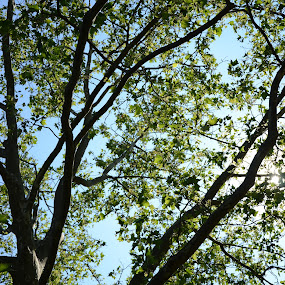 Perfect View by Lacy Gillott - Nature Up Close Trees & Bushes ( sky, tree, summer, ontario, spring )