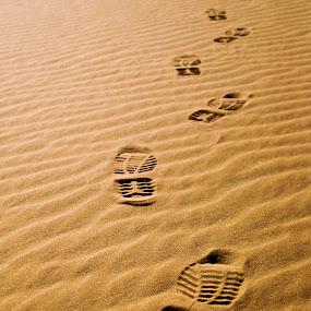 Desert Path by João Ferreira - Nature Up Close Sand ( desert sand dune )