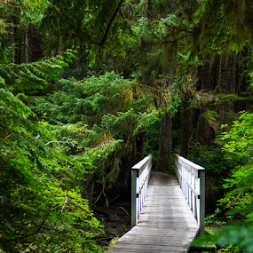 Boardwalk to San Josef Bay by Carrie Cole - Landscapes Forests ( nature walk, san josef bay, cape scott, forest, hiking, boardwalk, provincial park, nature, trail, bridge, bc, walk, hike, british columbia )