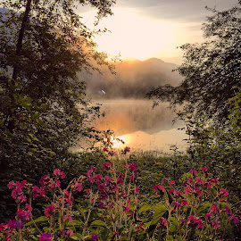 Sunrise over the lake and flowers by Aleš Krivec - Instagram & Mobile iPhone ( hill, reflection, mountain, purple, green, lake, house, sun, mystic, mystical, fog, sunny, pink, sunrise, flowers, floral, mist )