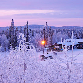 Winter in Finland by Fiona Etkin - Landscapes Weather ( holiday, winter, nature, lilac, ski resort, snow, trees, finland, pink, travel, landscape )