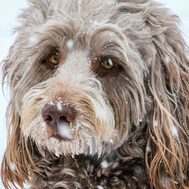 by Kathy Suttles - Animals - Dogs Portraits