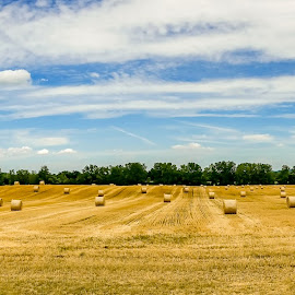 Holy Hay Bales by Adam Northrup - Landscapes Prairies, Meadows & Fields ( clouds, farm, field, blue sky, sunny, hay, bales )