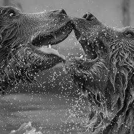 by James Harrison - Black & White Animals
