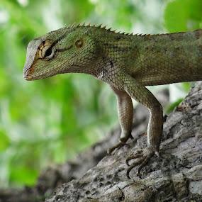 by Subrata Sarkar - Animals Reptiles