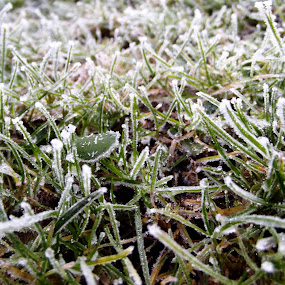by Hayley Springall - Nature Up Close Leaves & Grasses ( plant, frost )