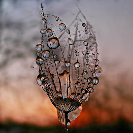 Stay So Special Forever by Marija Jilek - Nature Up Close Natural Waterdrops