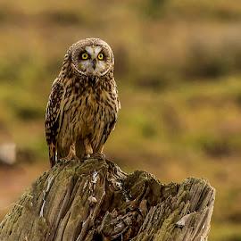 by Peter Murphy - Animals Birds