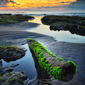 Just an old tree by Hendri Suhandi - Landscapes Sunsets & Sunrises ( bali, tree, sunset, beach, sunrise, landscape )