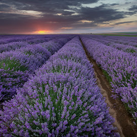 landscape with lavender field by Eduard Valentinov - Landscapes Prairies, Meadows & Fields ( fragrance, travel, vibrant, plantation, backdrop, sky, nature, cultivation, flower, spa, texture, twilight, agriculture, horizon, lavender, sunlight, dusk, row, rural, country, scent, outdoors, moody, cultivated, scene, view, plant, landscape, blossom, sun, tranquil, dramatic, bulgaria, aromatherapy, purple, cloudscape, landscaped, field, amazing, red, industrial, pattern, color, sunset, cloud, summer, sunrise, stunning, scented,  )