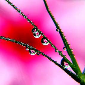 dew flowers by Nani Garu - Nature Up Close Leaves & Grasses ( water, macro, grass, dew, flowers )