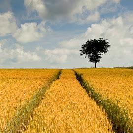 by Siniša Almaši - Nature Up Close Other plants ( sky, path, view, depth, nature, plants, up close, tree, clouds, landscape, colors,  )
