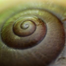 Snail Shell by Guru Prasad - Nature Up Close Hives & Nests ( macro, macro photography, guru prasad, nature close up, snail )