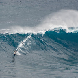 Jaws Rider by Keith Sutherland - Sports & Fitness Surfing