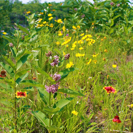 by Denise Dunkley Hall - Landscapes Prairies, Meadows & Fields