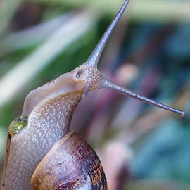 The End of the Road by Gillian James - Animals Other ( shell, gastropoda, gastropod, snail, garden )