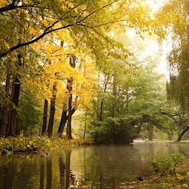 Reflection by Witold Steblik - City,  Street & Park  City Parks ( water, nature, park, autumn, landscape )