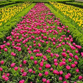 by Estislav Ploshtakov - Flowers Flower Gardens