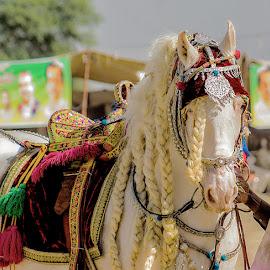 by Mohsin Raza - Animals Horses