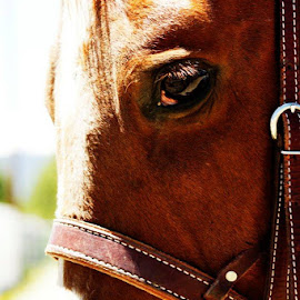 Horse Close Up by Patty Raven - Animals Horses (  )