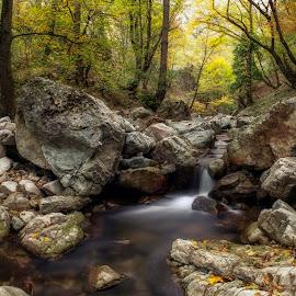 Autumn by the river by Plamen Petkov - Landscapes Forests ( autumn, long exposure, landscape, slow shutter, river )