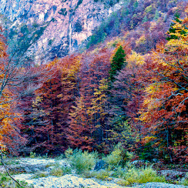 by Stanley P. - Landscapes Forests (  )