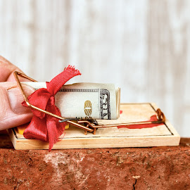 Money Trap by Rob Heber - Artistic Objects Other Objects ( theft, detail, gift, mouse trap, wood, bill, holding, brick, indoors, stealing, wood grain background, red brick, currency, folded money, grabbing, grasping, action, money, caught, wood grain, closeup, ideas, red bow, pinching, texture, human hand, finger, trap, rodent trap, twenty dollar bill, concepts, close up, taking, rough texture, paper money, cash, bow, thumb, conceptual )