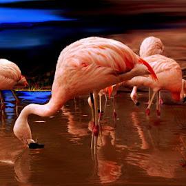 by Alberto Nadgar R. - Digital Art Animals ( flamenco, ilustracion, cordillera )
