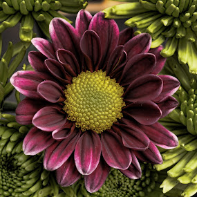 Among friends by Mike Neal - Nature Up Close Flowers - 2011-2013
