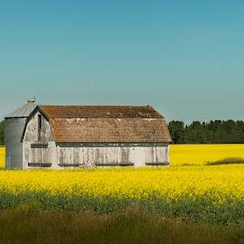 Farmland Color  by Bob Harriman - Landscapes Prairies, Meadows & Fields ( farm, sky, barn, grain bin, crops, farmland, yellow, crop )
