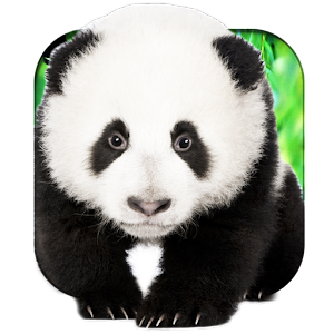 Talking Pandas 3D Live WP