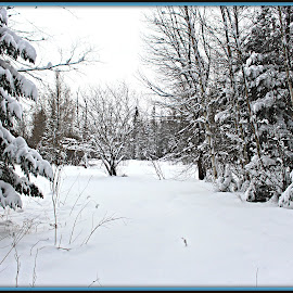 winter Forests  by Leanna Leger - Landscapes Forests ( forests, winter, nature )