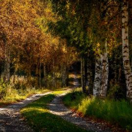by Bojan Bilas - Landscapes Forests
