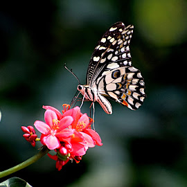 Wild Flowers by Vivek Sharma - Animals Insects & Spiders ( vivekclix, wild, butterfly, nature, vivek, beauty in nature, flower )