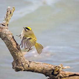 by Ioannis Alexander - Animals Birds