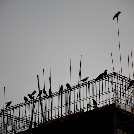Meeting in progress by Zaman Ekushay - Novices Only Abstract ( leadership, meeting, crow, construction, gloomy )