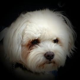 small dog by Patrizia Emiliani - Animals - Dogs Portraits
