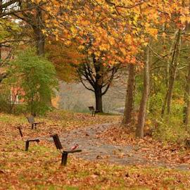 by Donna Schmidt - City,  Street & Park  City Parks