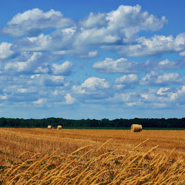 Hay Bales in The Field  by T Sco - Landscapes Prairies, Meadows & Fields ( sky, hay, field, rural, farming, farm, land, pasture, meadow, crop )