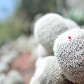 baby cactus by Zack Hsu - Novices Only Flowers & Plants ( close up, cactus,  )