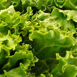 Lettuce 2 by RMC Rochester - Food & Drink Fruits & Vegetables ( macro, random, abstract, vegetables, lettuce, food, colors,  )