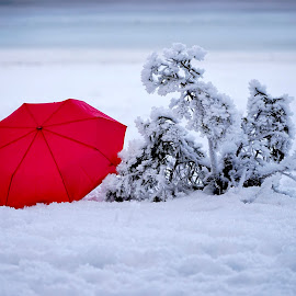 Red umbrella by Uroš Petrič - Artistic Objects Clothing & Accessories ( winter, red, cold, snow, umbrella, lake, frozen )