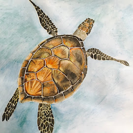 Sea Turtle  by Anika McFarland - Drawing All Drawing ( sea turtle, ocean, ocean animal, turtle, drawing, animal )