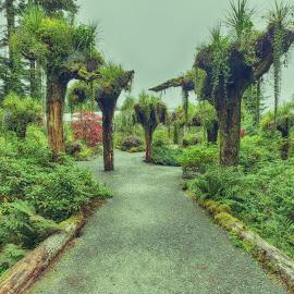 Glacier Gardens, Juneau by Nancy Merolle - Landscapes Travel ( alaska juneau, upside down trees, gardens, trees, landscapes, glacier gardens )
