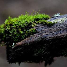Tree trunk with moss by Cristobal Garciaferro Rubio - Nature Up Close Trees & Bushes ( trunk, tree, green, bark, moss, bokeh )