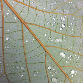 Rain Drops by Gareth  Evans - Instagram & Mobile iPhone