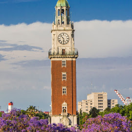 Torre Monumental and Jacarandas, Buenos Aires by Venetia Featherstone-Witty - Buildings & Architecture Statues & Monuments ( argentina, tower, clock tower, jacarandas, buenos aires, architecture )